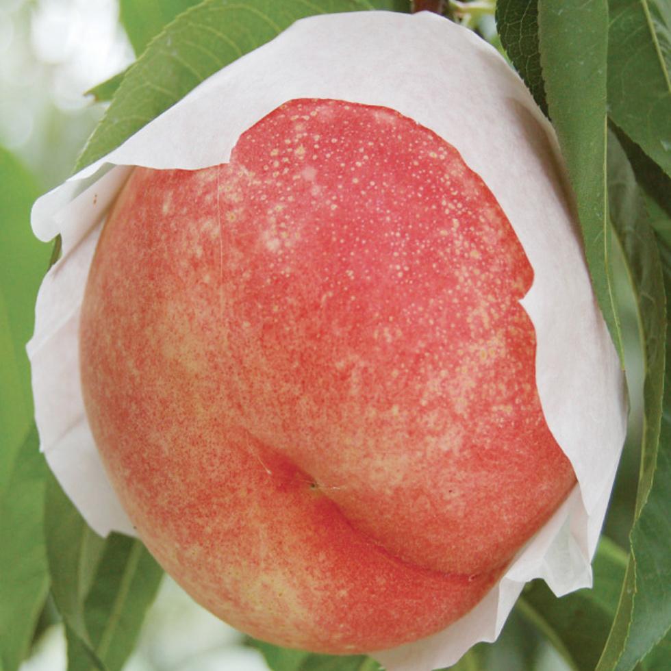 桃水 品種