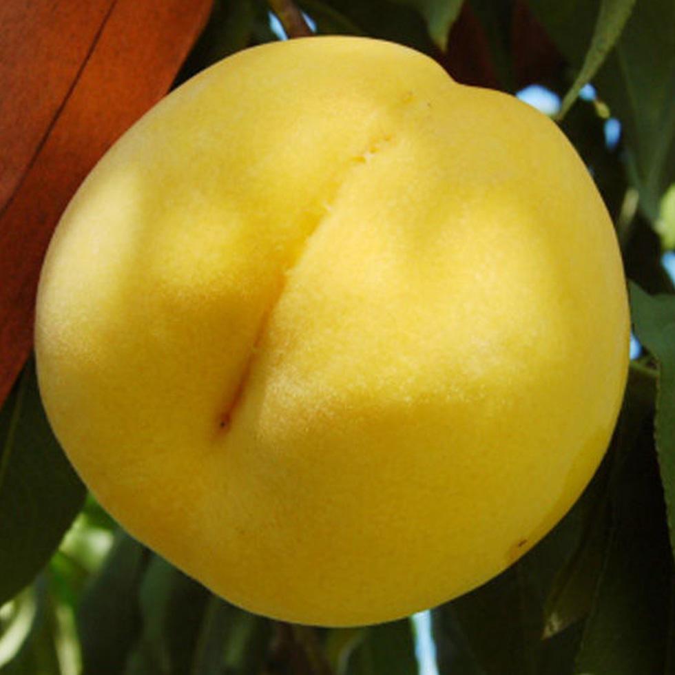 黄貴妃 桃