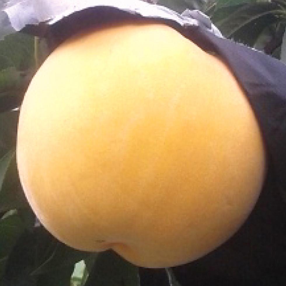 黄ららのきわみ 桃
