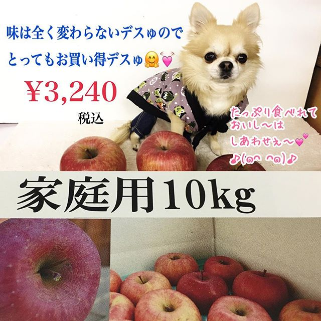 りんご大使テリーナデスゅ〜٩(^‿^)۶12月に入って、福島サンふじりんごの出荷に大忙しの菱沼農園さん!おかげさまで、贈答品のりんごは完売になったデスゅ!ご注文いただいた皆様、ありがとごじゃいましたぁ!これからご注文いただけるのは、家庭用10キロのみになるデスゅ♪(๑ᴖ◡ᴖ๑)♪*ぜひぜひ、おいしさそのまま、たっぷり食べれる「福島サンふじりんご家庭用10キロ」をどうぞデスゅ〜٩(^‿^)۶〜*ご注文はこちら︎︎︎から〜♪https://hishinumanouen.stores.jpお待ちしてるデスゅ〜٩(^‿^)۶〜#菱沼農園#福島市 #福島りんご#サンふじりんご#飯坂町#くだもの名人#おいしいはしあわせ#贈答品#完売御礼 #りんご大使