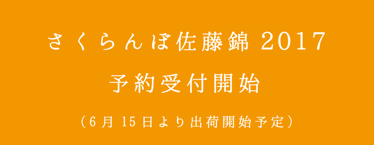 佐藤錦2017