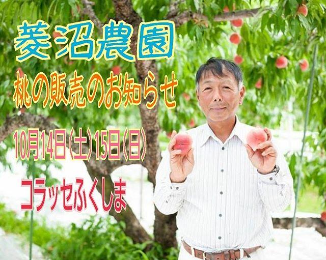 ☆★告知★☆10月14日&15日の明日と明後日の2日間、福島駅西口のコラッセふくしまさんで、菱沼農園の桃を販売いたします今年の桃を食べるラストチャンスでございます皆さまのご来場を心よりお待ちしております♪♪♪#桃#福島駅#西口#秋#コラッセふくしま#催事#イベント#フルーツ#ふくしま#くだもの#販売