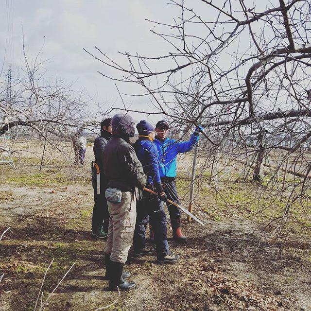 『重要な剪定作業』昨日・今日の2日間は、福島成田会の皆さんが菱沼農園に来園し、剪定の講習会を行いました剪定(せんてい)とは、皆さんもご存知かと思いますが、樹の枝と葉を切る作業のことです。しかし、むやみやたらに枝を切ることは出来ません!剪定は果樹を栽培する上でとても重要な役割をもっています。増えた枝を切る事で、養分をバランスよく行き渡らせたり、風通しや日当たりをよくしたりと、品質の良い美味しいくだものを実らせる為にかかせない、そしてとっても難しい作業なのです(^_^;) その為、こうして毎年青森県から先生をお呼びし、市内の農家さんの畑を周りながら剪定講習会を開いているのが福島成田会です皆さん寒い中、真剣に作業されていますお疲れ様でした(*^-^) #菱沼農園#福島成田会#剪定#りんご#果樹#栽培#講習会