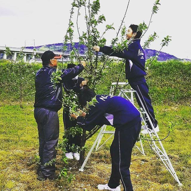 ★生徒さんと★今日は毎年恒例の、生産学習の日!菱沼農園のある福島市飯坂町では、果樹農家さんが多い土地柄、こうして中学生の皆さんが年数回にわたり、地元の農家さんを訪れ、生産体験学習を行います菱沼農園には中学1年生・男女6名の皆さんが来てくれました~とってもにぎやかに一生懸命作業をしてくれています写真はりんごの若木の花取りをしているところです#菱沼農園#職場体験#中学生#福島市#飯坂#くだもの#りんご#花#元気いっぱい#晴れ