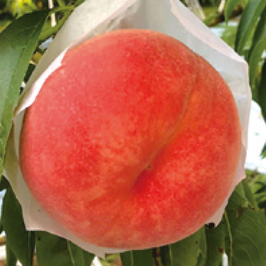 あぶくま 桃
